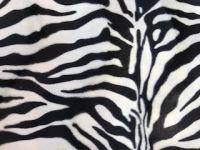 Fellimitat Zebra